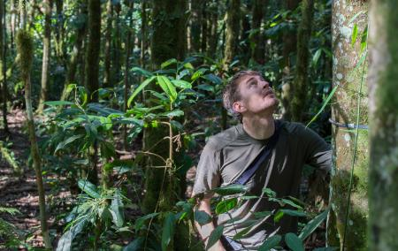 Dr. Kenneth Feeley looks up at a tree in the Amazon rain forest.